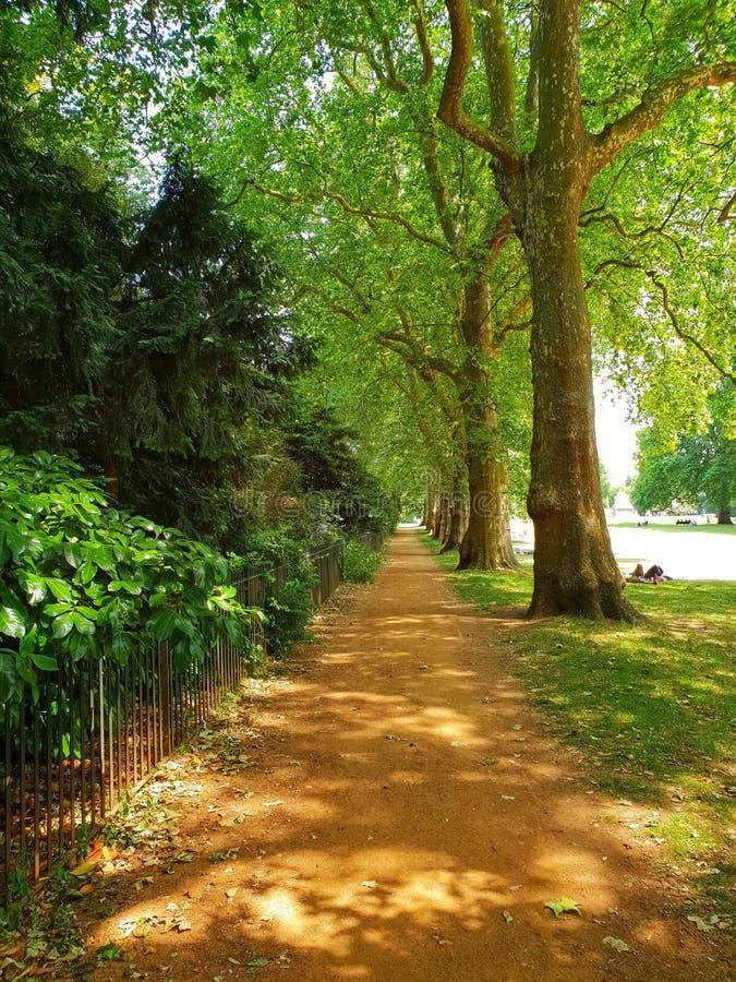 Groene weg royalty-vrije stock afbeeldingen