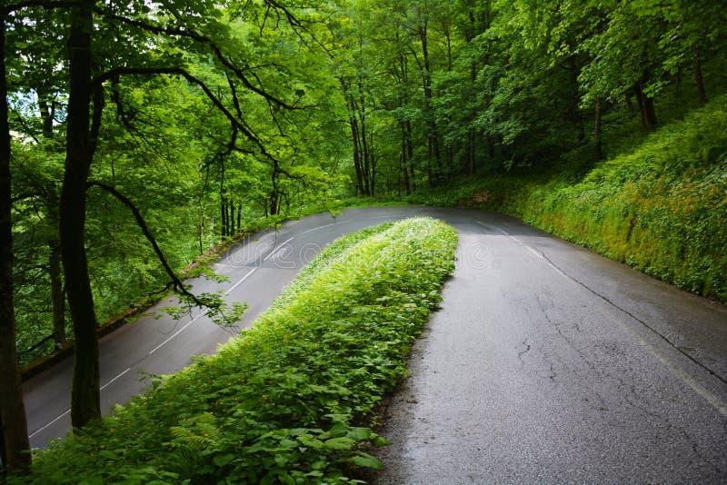 Groene Wegen in het hout royalty-vrije stock foto