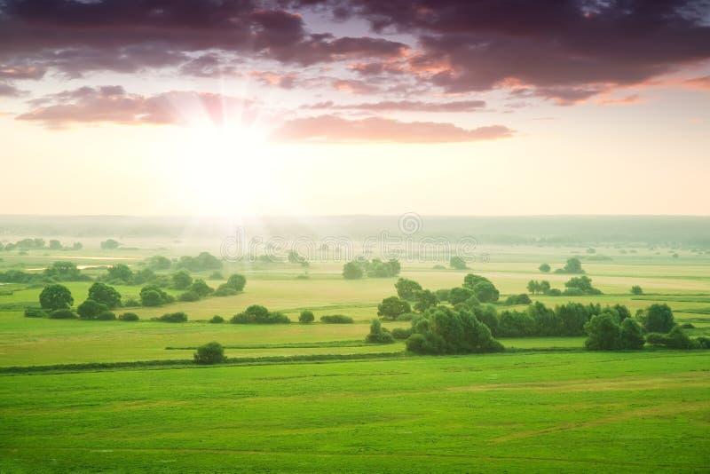 Groene weide bij dageraad stock afbeelding