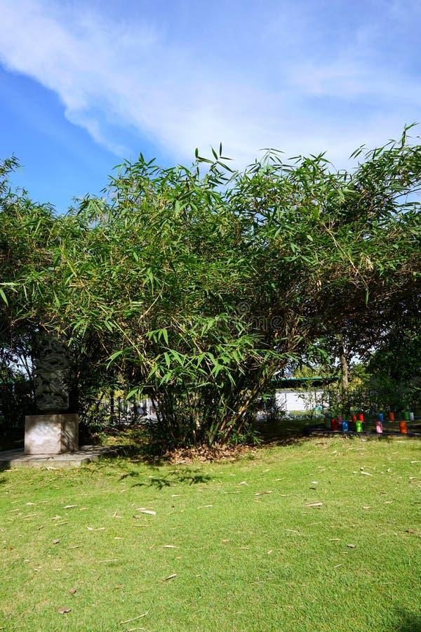 Groene weide met bomen en blauwe hemel als achtergrond royalty-vrije stock afbeelding