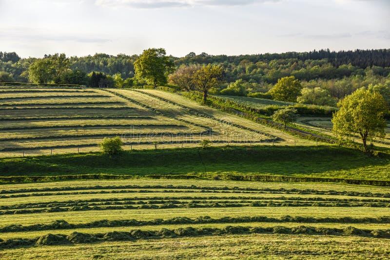Groene weide met met rijen van het drogen van hooi stock foto's