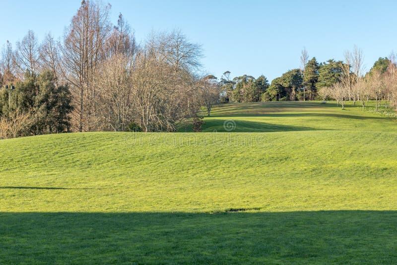 Groene weide met sommige bomen onder een duidelijke blauwe hemel royalty-vrije stock afbeelding
