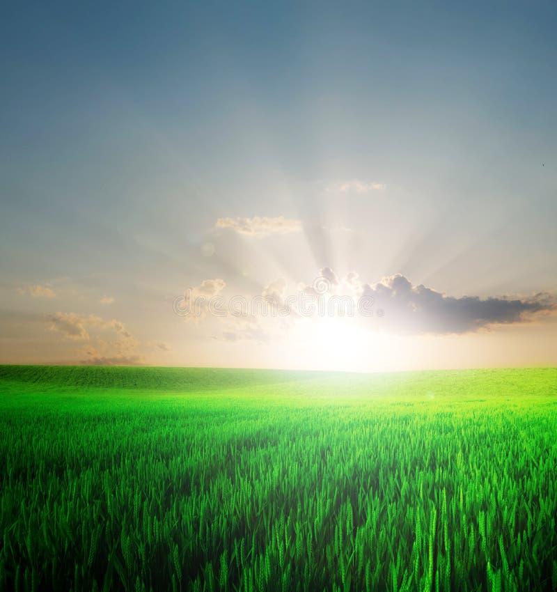 Groene weide onder blauwe hemel stock afbeelding