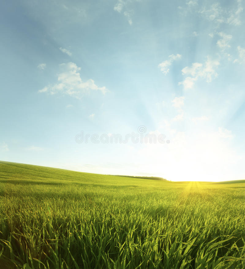 Groene weide onder blauwe hemel royalty-vrije stock afbeeldingen