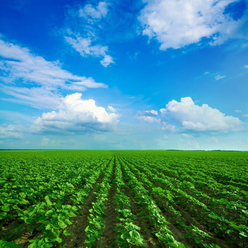 Groene weide onder blauwe hemel stock fotografie