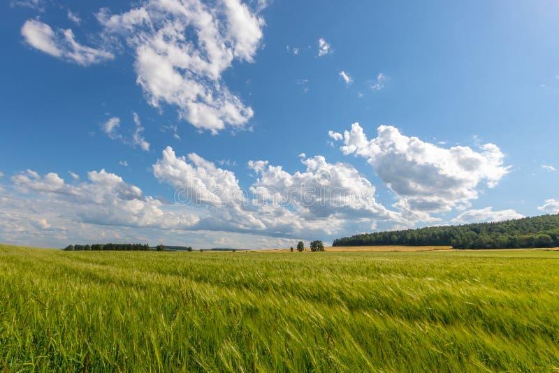 Groene weide onder blauwe hemel met wolken stock foto's