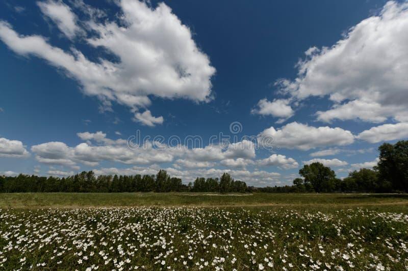 Groene weide onder blauwe hemel met wolken stock fotografie