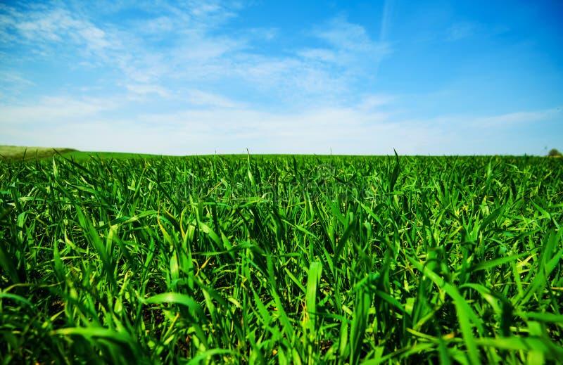 Groene weide onder blauwe hemel met wolken royalty-vrije stock afbeeldingen
