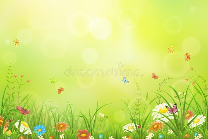 Groene weideachtergrond stock fotografie