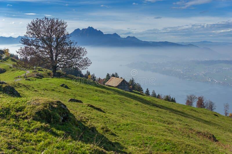 Groene weiden boven Meer Luzerne, dichtbij onderstel Rigi, Alpen, Zwitserland royalty-vrije stock foto