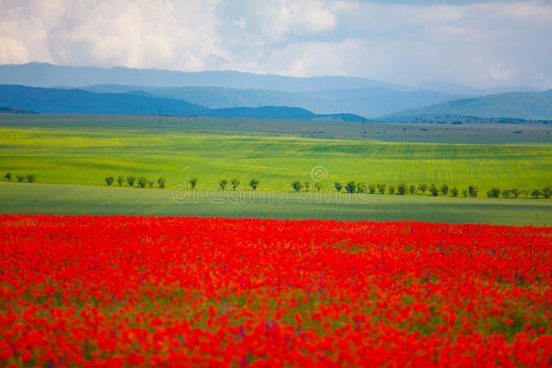 Groene weiden op bergachtergrond Vage papavers in voorgrond royalty-vrije stock fotografie