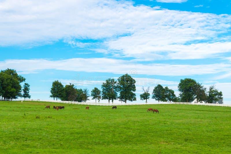 Groene weilanden van paardlandbouwbedrijven De zomerlandschap van het land royalty-vrije stock fotografie