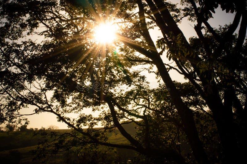 Groene wereld en zijn schoonheid, die de lucht omzetten in zuiverheid royalty-vrije stock fotografie
