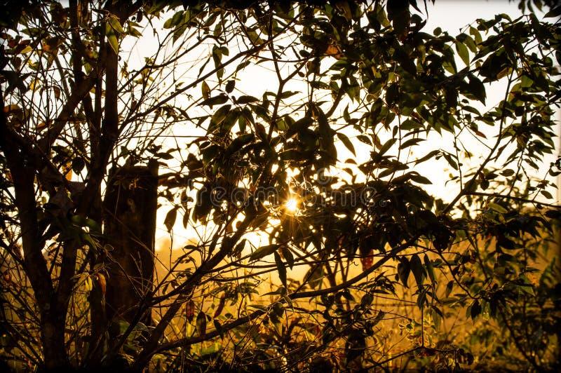 Groene wereld en zijn schoonheid, die de lucht omzetten in zuiverheid stock foto's