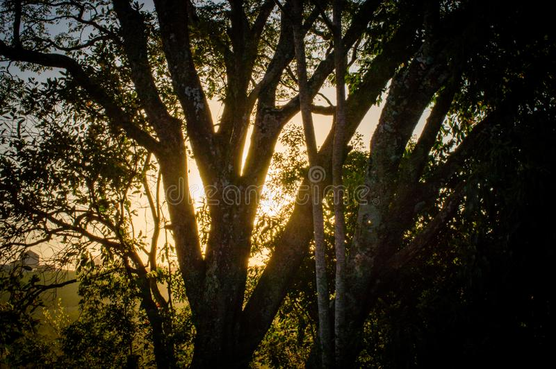 Groene wereld en zijn schoonheid, die de lucht omzetten in zuiverheid royalty-vrije stock afbeelding