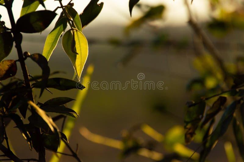 Groene wereld en zijn schoonheid, die de lucht omzetten in zuiverheid royalty-vrije stock foto's