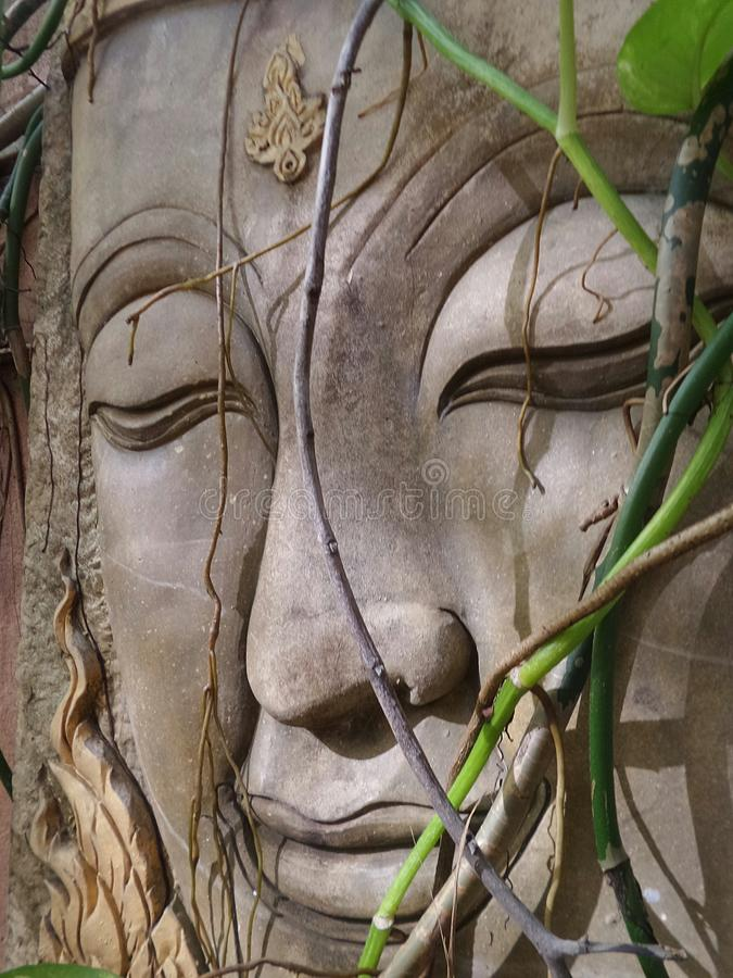 Groene wijnstok op steen die het gezicht van Boedha snijden royalty-vrije stock foto