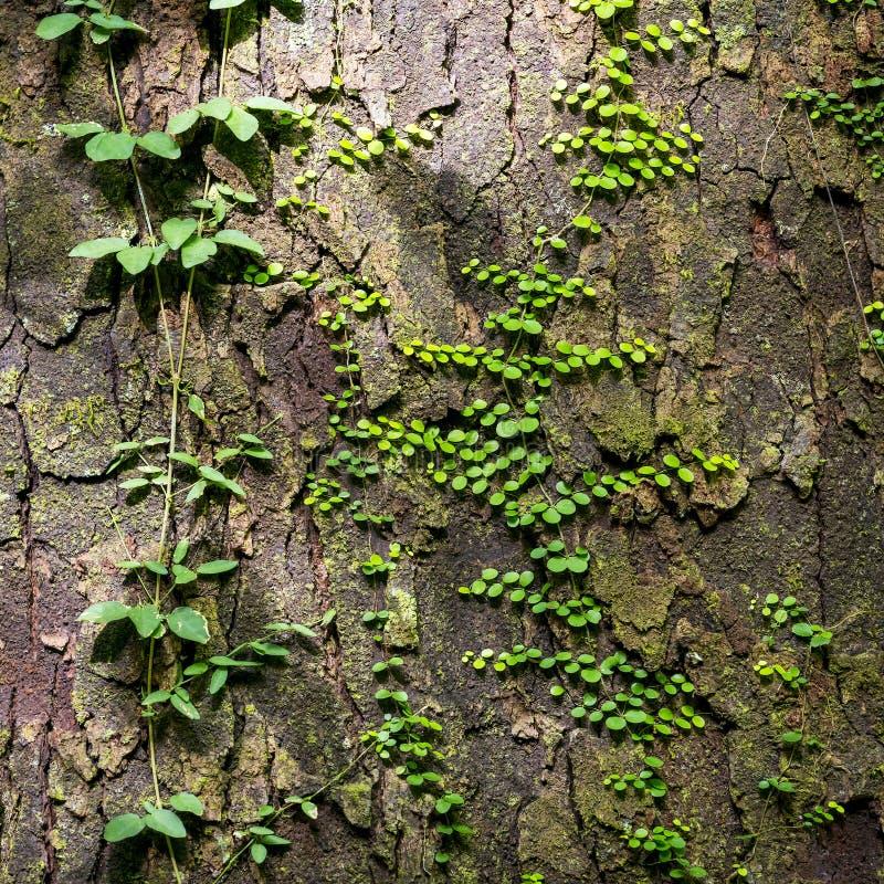 Groene Wijnstokken als Natuurlijke Achtergrond royalty-vrije stock fotografie
