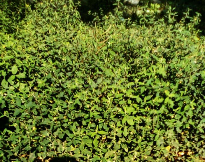 Groene wilde bloemen in bos in Dar Es Salaam Tanzania royalty-vrije stock afbeelding
