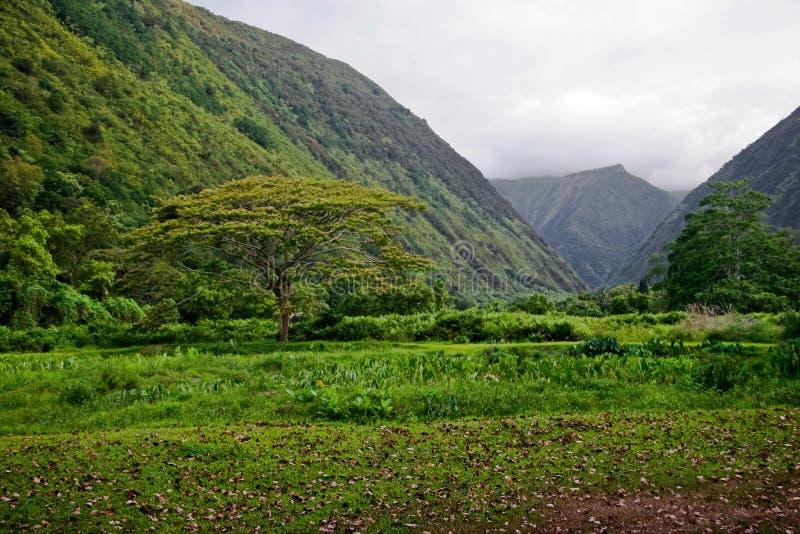 Groene wildernis van Hawaï stock afbeeldingen