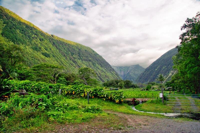 Download Groene wildernis van Hawaï stock afbeelding. Afbeelding bestaande uit achtergrond - 10779061