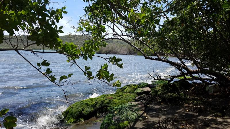 Groene zeewier en bomen en water op kust in Guanica, Puerto Rico royalty-vrije stock foto's