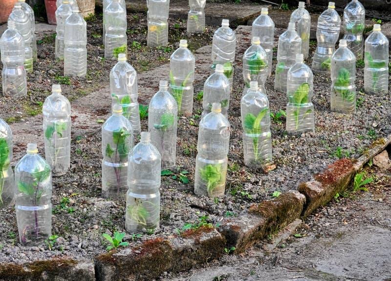 Groenten groeien beveiligd in plastic flessen royalty-vrije stock afbeelding
