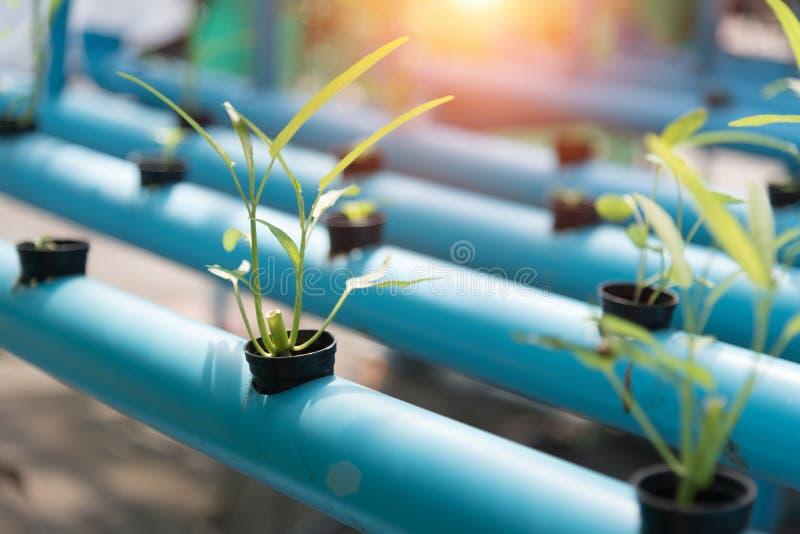 Groentenhydrocultuur die op landbouwgrondachtergrond bewerken Organisch F stock foto