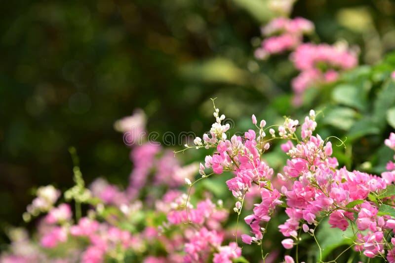 Groep bloem groep roze stock fotografie