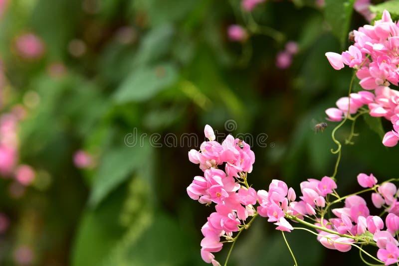 Groep bloem groep roze royalty-vrije stock fotografie