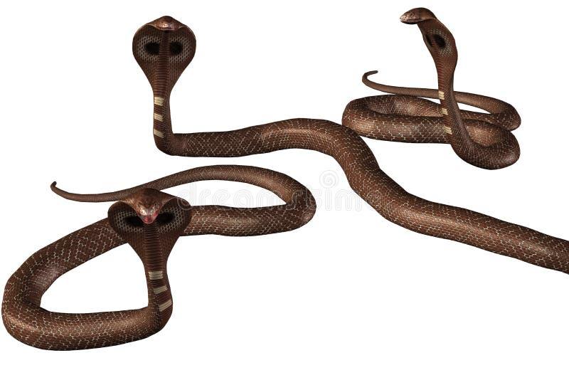 Groep bruine cobra-slangen royalty-vrije illustratie