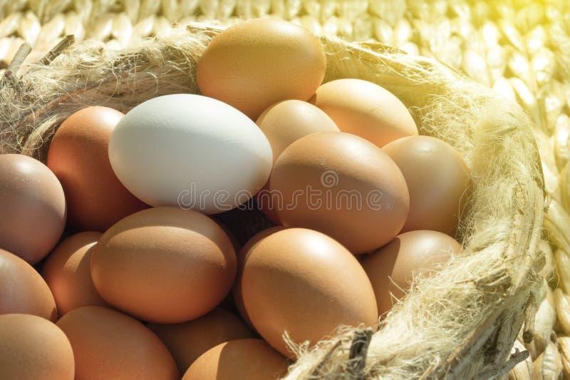 Groep bruine kippeneieren behalve één die wit op een vogelnest wordt geplaatst royalty-vrije stock afbeeldingen
