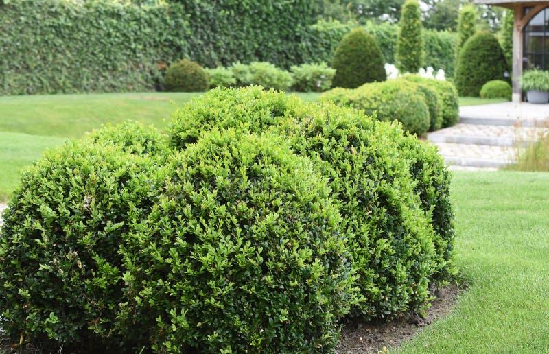 Groep bukshoutinstallaties in mooie tuin royalty-vrije stock fotografie