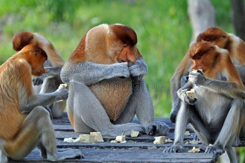 Groep de Apen van Zuigorganen stock foto's