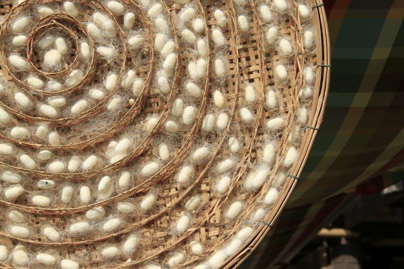 Groep de nesten van zijderupscocons stock foto