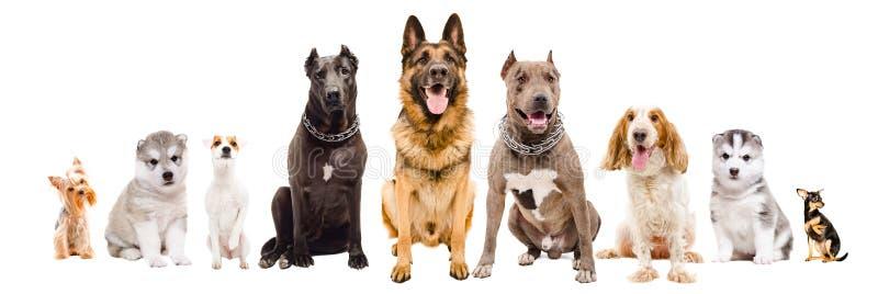 Groep die honden van verschillende rassen samen zitten stock afbeelding