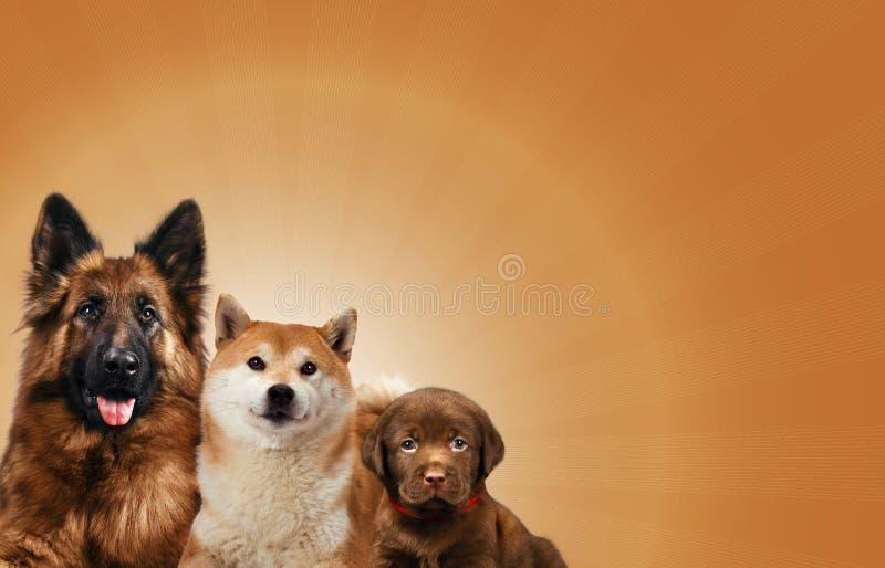 Groep die honden voor een bruine achtergrond zitten royalty-vrije stock fotografie