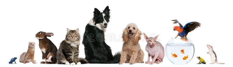 Groep die huisdieren voor witte achtergrond zit stock foto