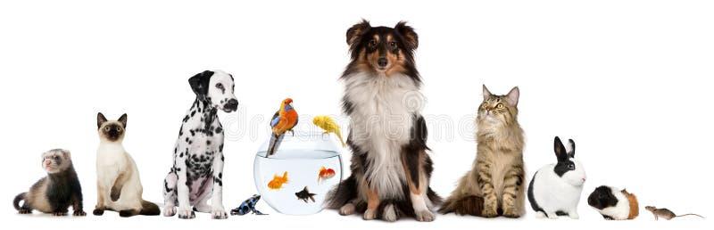 Groep die huisdieren voor witte achtergrond zit royalty-vrije stock afbeelding