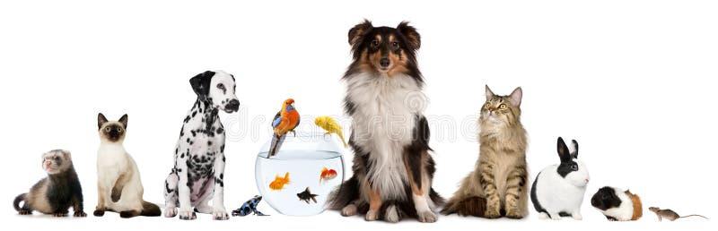 Groep die huisdieren voor witte achtergrond zitten royalty-vrije stock afbeelding
