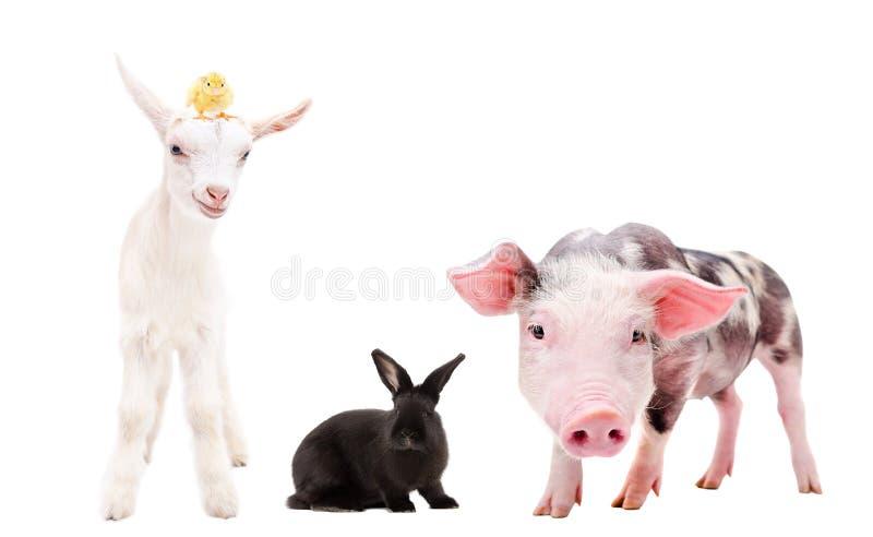 Groep die landbouwbedrijfdieren zich verenigen royalty-vrije stock foto