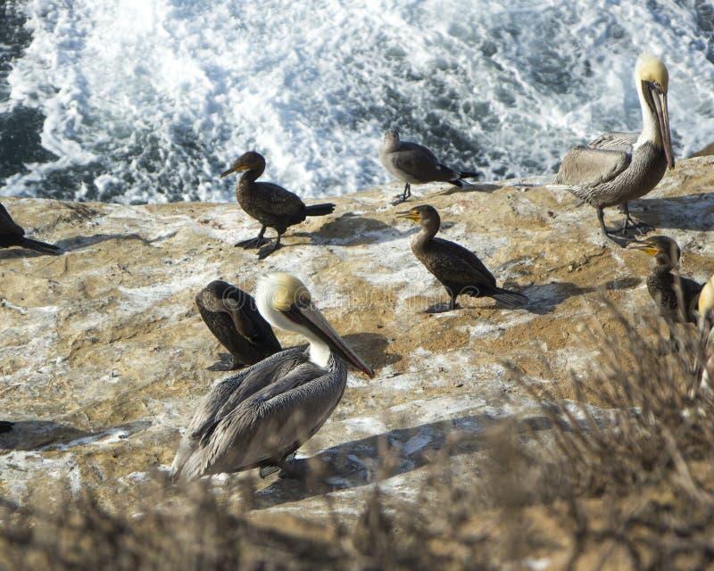 Groep die zeevogels op een rots door het water rusten stock fotografie