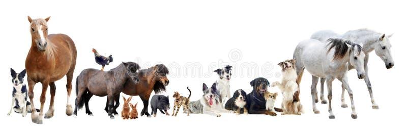 Groep dieren royalty-vrije stock fotografie