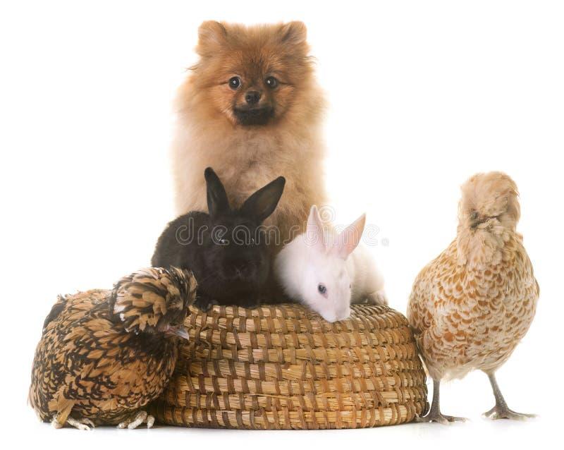 Groep dieren stock afbeeldingen