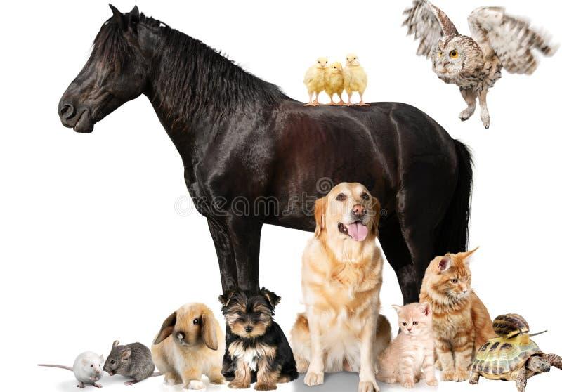 Groep dieren op witte achtergrond stock afbeeldingen