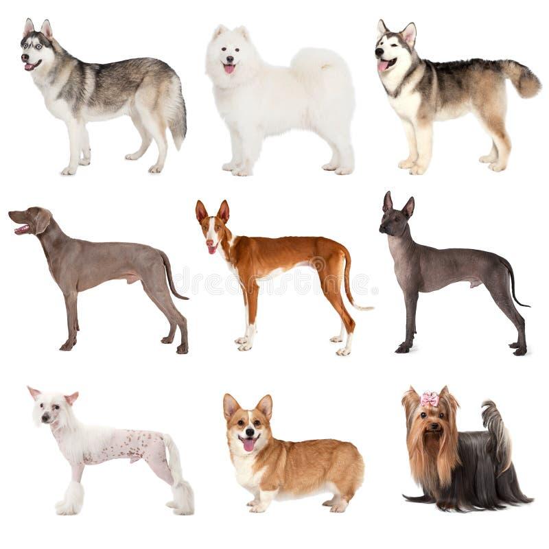 Groep diverse honden royalty-vrije stock afbeeldingen