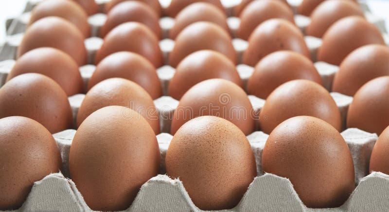 Groep eierenkip op het document vakje, markt verpakking, natuurvoeding voor iedereen voor gezond lichaam dagelijks te eten stock foto's
