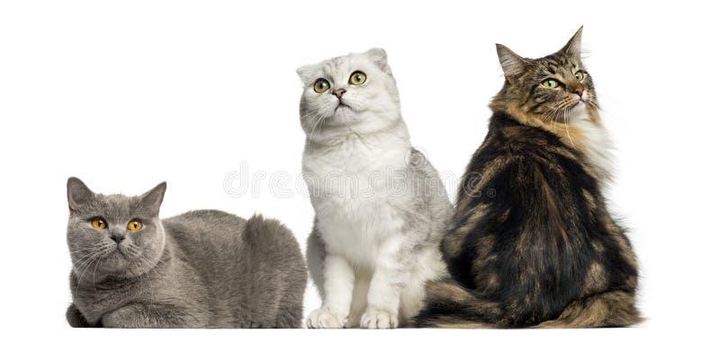 Groep en katten die zitten liggen royalty-vrije stock afbeelding