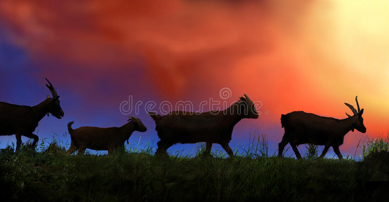 Groep geiten stock foto