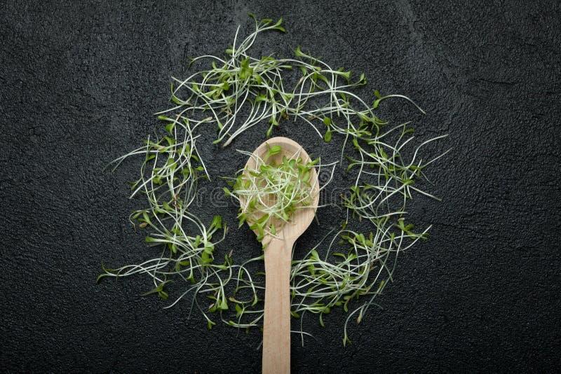 Groep groene spruiten, micro- greens, babygroenten op een zwarte achtergrond in de vorm van een cirkel rond een houten lepel royalty-vrije stock foto